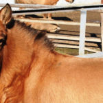 «День лошадей» в Зоопарке