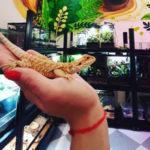 Приглашаем посетить выставку- кофейню с дружелюбными рептилиями!