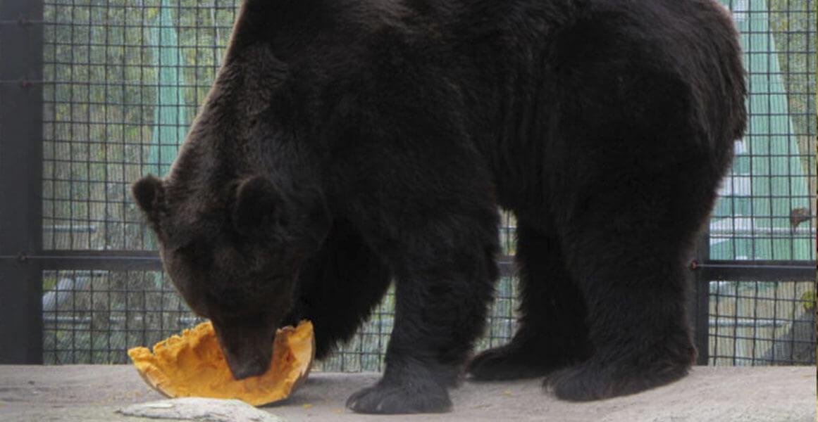 День медведей в Одесском зоопарке