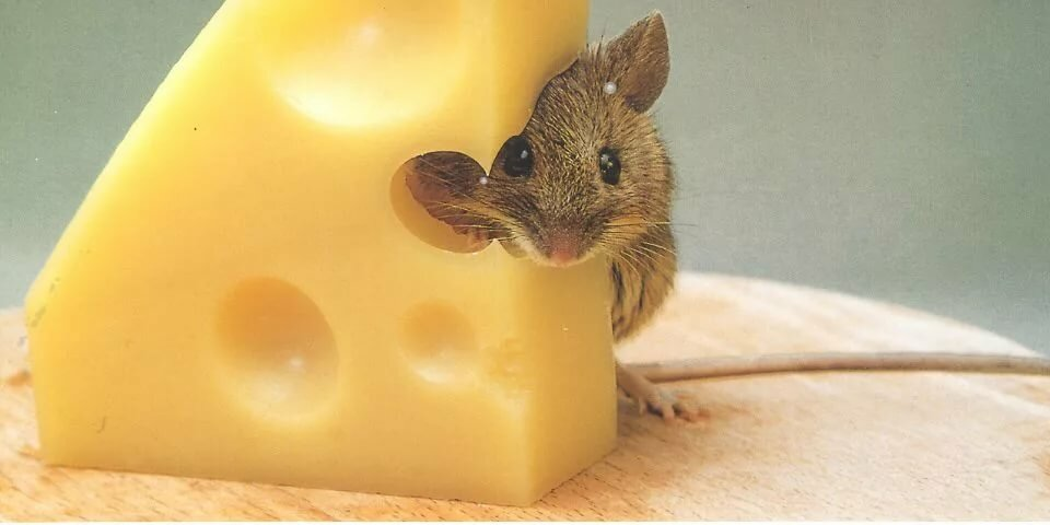 Спектакль все мыши любят сыр🐭